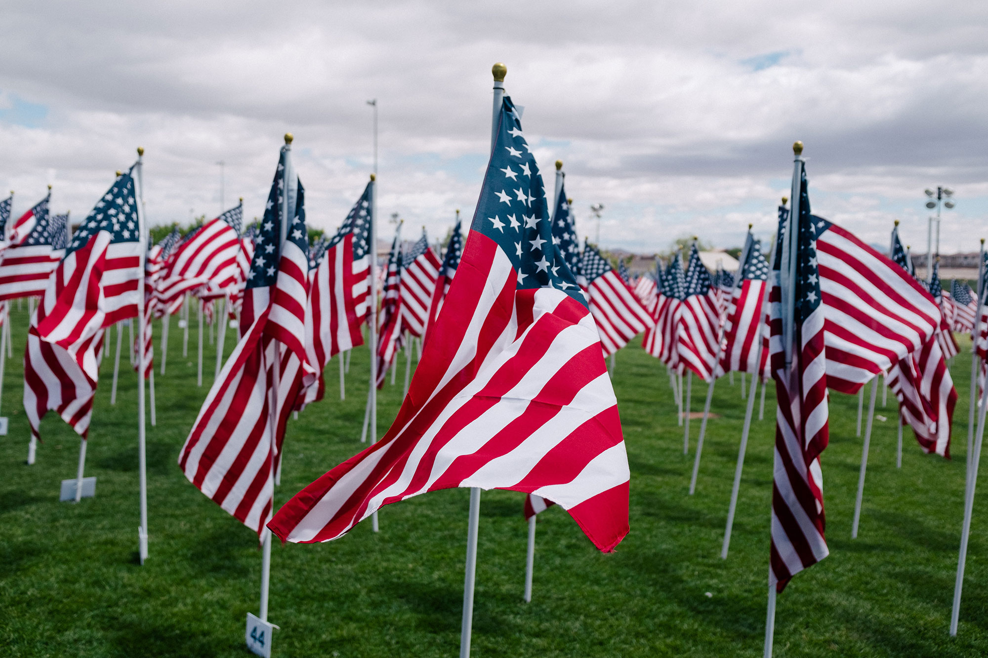 Rows of flags in the grass